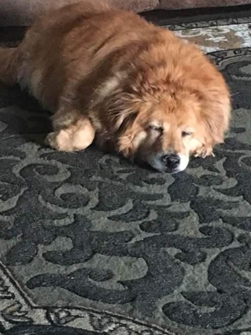 Bailey sleeping