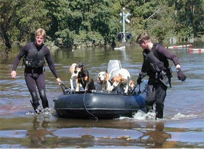 keeping pets safe in disasters